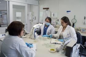 Seguimiento a la calidad de los bioinsumos a base de hongos benéficos.